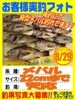 photo-okyakusama-20130829-koyaura-mebaru.jpg
