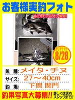 photo-okyakusama-20130828-kikugawa-tinu3.jpg