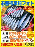 photo-okyakusama-20131021-kamagarioki-hamachi&sawara.jpg