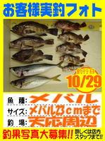 photo-okyakusama-20131030-Koyaura-mebaru.jpg