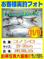 photo-okyakusama-20131109-hikoshima-konosiro.jpg