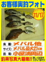 photo-okyakusama-20131118-koyaura-mebaru.jpgのサムネイル画像のサムネイル画像