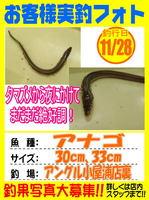 photo-okyakusama-20131128-koyaura-anago.jpg
