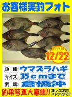 photo-okyakusama-20131222-Koyaura-hage.jpg