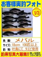 20140103-yamaguchi-mebaru.jpg