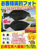 blog-20140103-saka-karei.jpg