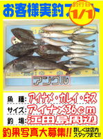 photo-okyakusama-20140102-Koyaura-ainame01.jpg