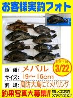 20140322-yamaguchi-mebaru.jpg