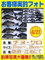 20140427-yamaguchi-tinu.jpg