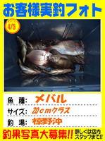 okyakusama-20140406-ooshima-meba.jpg