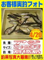 photo-okyakusama-20140420Koyaura-aji01.jpg