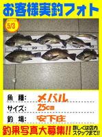 okyakusama-20140505-ooshima-mebarinngu.jpgのサムネイル画像