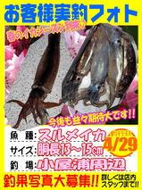 photo-okyakusama-20140429-koyaura-surume.jpg
