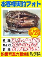 photo-okyakusama-20140525-Koyaura-surume01.jpg