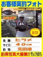blog-20140821-kikugawa-hirame.jpg