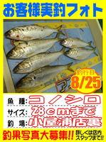 photo-okyakusama-20140825-Koyaura-konosiro01.jpg