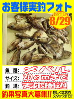 photo-okyakusama-20140829-Koyaura-Mebaru01.jpg