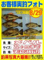photo-okyakusama-20140829-Koyaura-Mebaru02.jpg