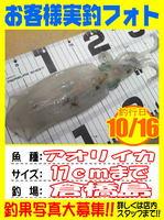 okyakusama-20141016-koyaura-ika01.jpg