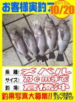 okyakusama-20141020-koyaura-mebaru01.jpg