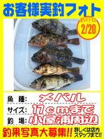 okyakusama-20150220-koyaura-mebaru1.jpg