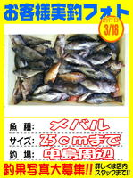 okyakusama-20150319-koyaura-mebaru1.jpg