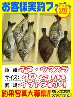 okyakusama-20150322-koyaura-tinu1.jpg