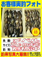 okyakusama-20140410koyaura-mebaru.jpg