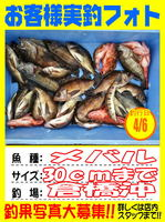 okyakusama-20140410koyaura-mebaru1.jpg