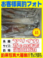 okyakusama-20150405-koyaura-ika1.jpg