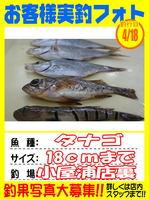 okyakusama-20150418-koyaura-tanago1.jpg