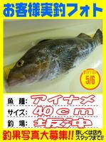 okyakusama-20140506koyaura-ainame.jpg