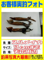 okyakusama-20140517koyaura-ika1.jpg