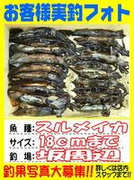 okyakusama-20150523-koyaura-ika1.jpg