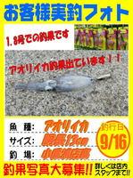 山部さん アオリイカ 2015.09.16.jpg