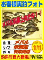 お客様 2015.11.11 メバル 天応.jpg
