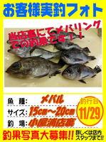 okyakusama-20151129-koyaura-mebaru.jpg