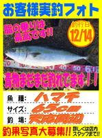 okyakusama-20151214-koyaura-hamati.jpg