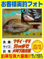 okyakusama-20160313-koyaura-madai-tinu.jpg