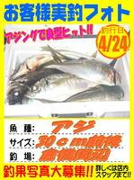 okyakusama-20160424-koyaura-aji.jpg