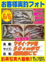 okyakusama-20160606-koyaura-madai.jpg