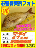 okyakusama-20170617-koyaura-madai.jpg