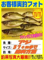 okyakusama-20171111-koyaura-aji.jpg