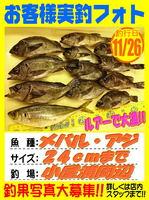 okyakusama-20171126-koyaura-mebaru.jpg
